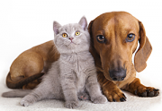 Edmonton Holistic Veterinary Clinic